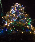 Иллюминация живой елки на территории  БЦ Eleven, Киев