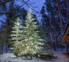 Иллюминация елок в сосновом лесу