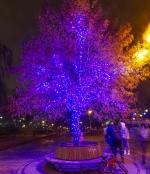 Новогоднее оформление парка, Киев